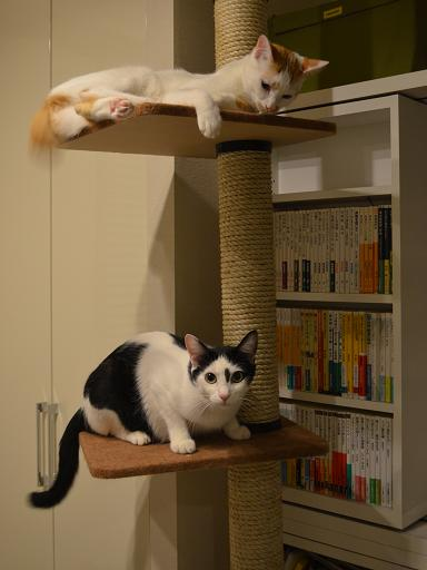cat tower.jpg